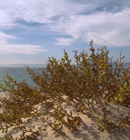 ruta-areoso